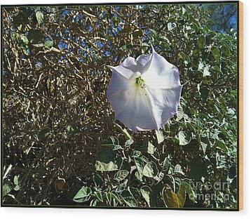Wood Print featuring the photograph  Sacred Datura by Angela J Wright