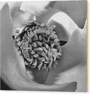 Sugar Of Magnolia Wood Print