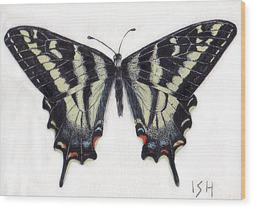 Swallowtail Butterfly  Wood Print by Inger Hutton