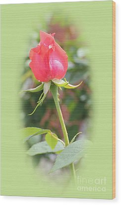 The Heart Of The Rose Wood Print by Judy Palkimas
