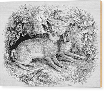 Two Hares Wood Print by Michael Dohnalek