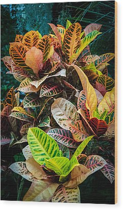 Variegated Plants Wood Print
