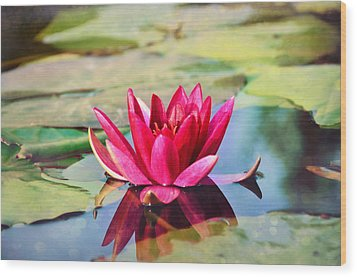 Water Lily Wood Print by Gynt