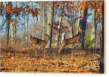 White Tail Deer Leaping  Wood Print by Peggy Franz