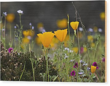 Wildflowers Explode Wood Print