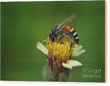 Working Bee Wood Print by Michelle Meenawong