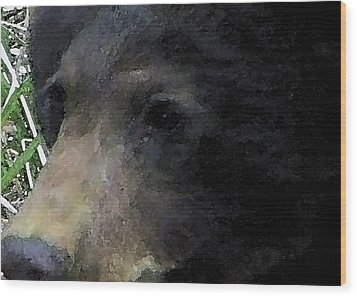 01042014 Black Bear Alaska Wood Print