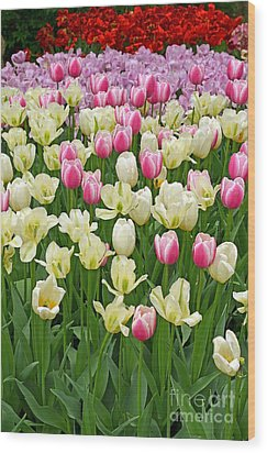 A Field Of Tulips Wood Print