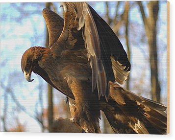 A Golden Eagle Wood Print by Raymond Salani III