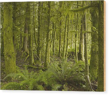 A Lush Forest Tofino British Columbia Wood Print by Ian Grant