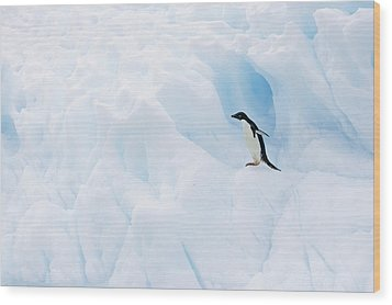Adelie Penguin On Iceberg Wood Print by Suzi Eszterhas