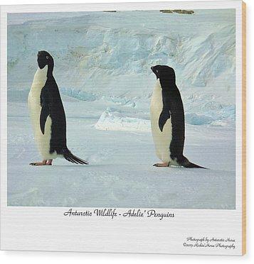 Adelie Penguins Wood Print by David Barringhaus