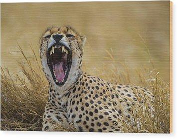 Africa Tanzania Cheetah (acinonyx Wood Print