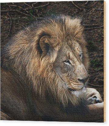 African Lion Wood Print by Tom Mc Nemar