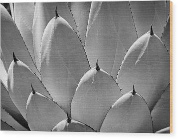 Agave Leaves Wood Print by Kelley King