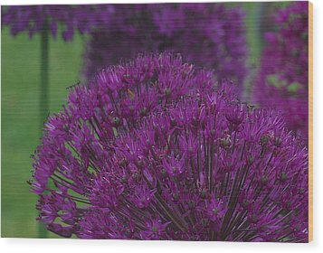 Wood Print featuring the photograph Allium 2 by Ken Dietz