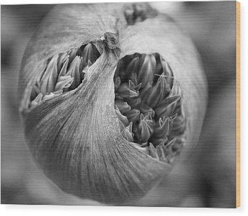 Wood Print featuring the photograph Allium Bud by Inge Riis McDonald