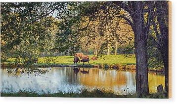 American Bison Wood Print by Sennie Pierson