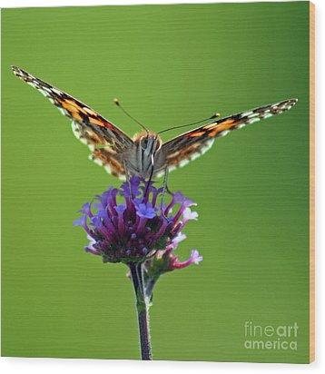 American Painted Lady Butterfly Wood Print by Karen Adams