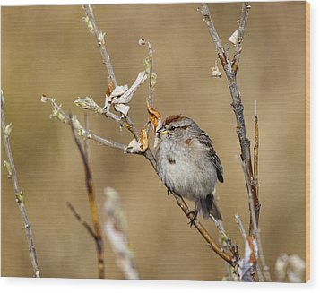 American Tree Sparrow Wood Print