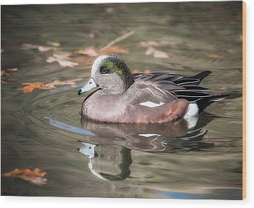 Wood Print featuring the photograph American Wigeon by Tyson and Kathy Smith