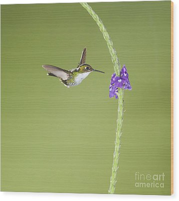 Wood Print featuring the photograph Andean Emerald Hummingbird by Dan Suzio