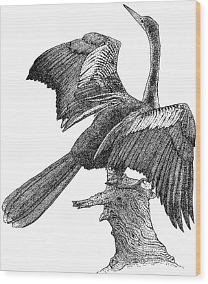 Anhinga Wood Print by Roger Hall