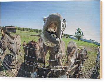 Animal Personalities Silly Talking Donkey With Whiskers Wood Print by Jani Bryson