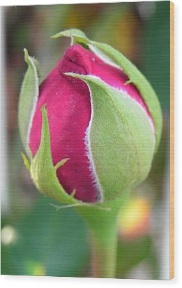 Wood Print featuring the photograph Anticipation by Deb Halloran