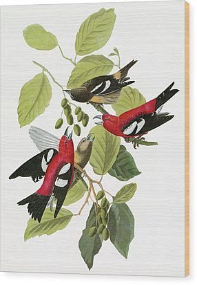 Audubon Crossbill Wood Print by Granger