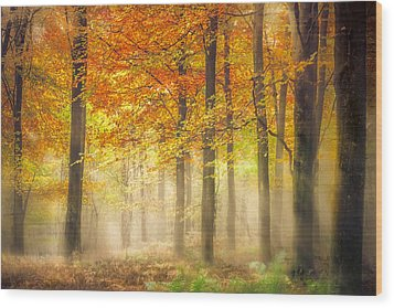 Autumn Gold Wood Print by Ian Hufton