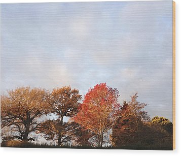 Autumn Wood Print by Les Cunliffe