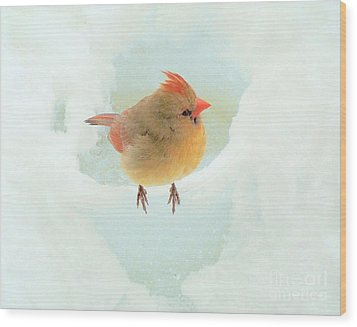 Baby Female Cardinal Wood Print