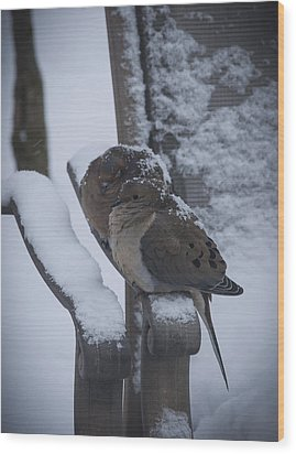 Wood Print featuring the photograph Baby It's Cold Outside 2 by Phil Abrams