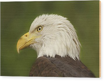 Wood Print featuring the photograph Bald Eagle  by Brian Cross