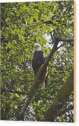 Bald Eagle Wood Print by Sylvia Hart