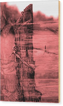 Barbed Wire Wood Print by Tommytechno Sweden