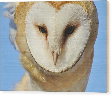 Barn Owl Up Close Wood Print by Paulette Thomas