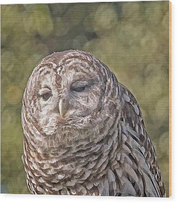 Wood Print featuring the photograph Barred Hoot Owl Photo Art by Constantine Gregory