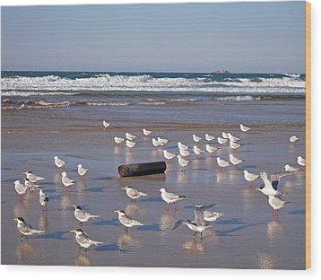Wood Print featuring the photograph Beach Birds by Ankya Klay