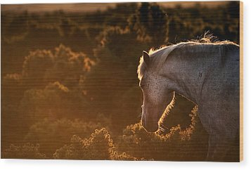 Beautiful Image Of New Forest Pony Horse Backlit By Rising Sun I Wood Print by Matthew Gibson