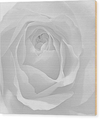 Beautiful Macro Close Up Of Fresh Sprring Rose Flower With Vibra Wood Print by Matthew Gibson