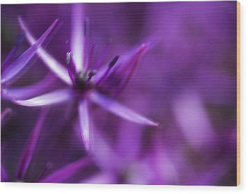 Beautiful Purple Floral Abstract Wood Print by Matthew Gibson