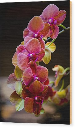 Beauty Of Orchids  Wood Print by Julie Palencia
