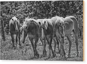 Wood Print featuring the photograph Belgian Draft Horses by Wilma  Birdwell