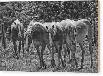 Belgian Draft Horses Wood Print by Wilma  Birdwell