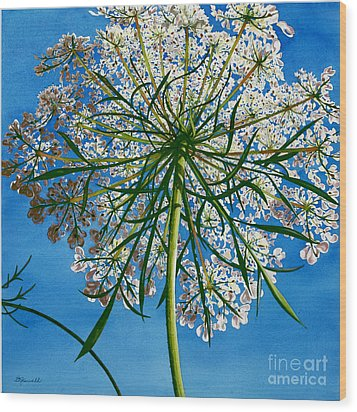 Beneath Queen Anne's Lace  Wood Print by Barbara Jewell