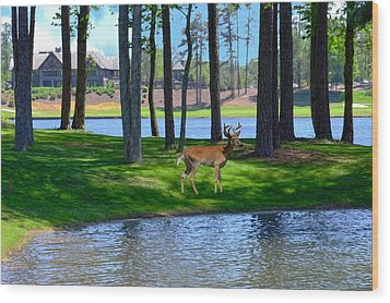 Big Canoe Buck Wood Print by Bob Jackson