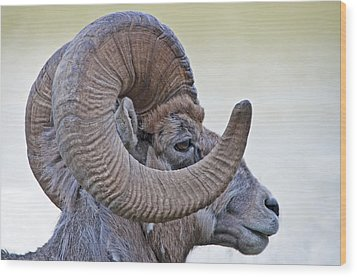 Wood Print featuring the photograph Bighorn Mountain Sheep 1 by Dennis Cox WorldViews