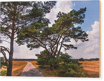 Bike Track In Hoge Veluwe National Park. Netherlands Wood Print by Jenny Rainbow